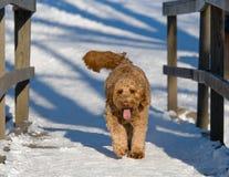狗冬天 图库摄影