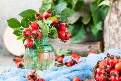 狗分支上升了用在花瓶的莓果 免版税库存照片