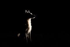狗剪影在晚上 库存图片
