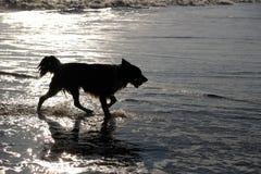 狗剪影在海 免版税库存图片