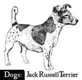 狗剪影样式杰克罗素狗 库存图片