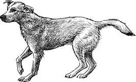 狗剪影  库存图片