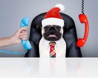 狗办公室工作者圣诞节假日 免版税图库摄影