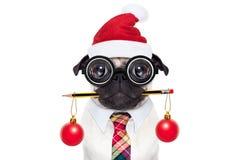 狗办公室工作者圣诞节假日 库存图片