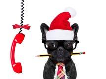 狗办公室工作者圣诞节假日 库存照片
