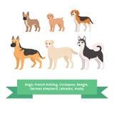 狗助长与法国牛头犬cockapoo小猎犬德国牧羊犬拉布拉多爱斯基摩的集合 查出的向量例证 库存例证