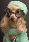 狗博士 库存照片