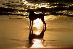 狗反映 免版税图库摄影