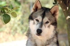 狗可爱的纵向 库存照片