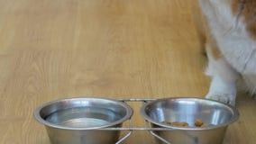 狗吃食物 影视素材