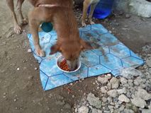 狗吃 库存图片