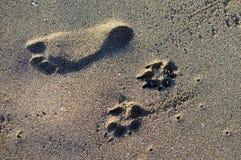 狗和人脚印 库存照片