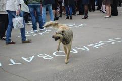 狗和人们 免版税库存照片