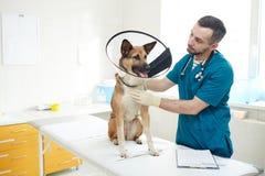 狗和兽医 免版税库存图片
