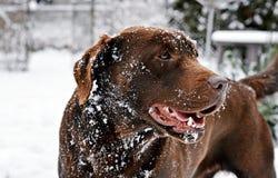狗和冬天 库存照片