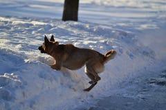 狗和冬天 免版税库存图片