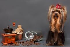 狗和咖啡 库存照片