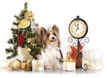 狗和圣诞节礼品 库存图片