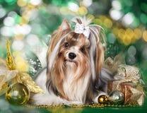 狗和圣诞节礼品 库存照片