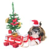 狗和圣诞节 免版税库存图片