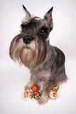 狗和复活节彩蛋 免版税库存图片