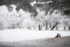 狗和小狗戏剧在冬天公园 免版税库存图片