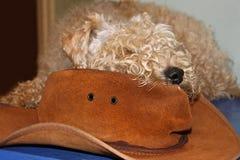 狗和帽子 库存照片