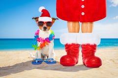 狗和所有者作为圣诞老人圣诞节的在海滩 免版税库存图片