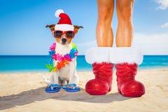 狗和所有者作为圣诞老人圣诞节的在海滩 库存图片