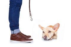 狗和所有者步行的 免版税库存图片