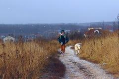 狗和所有者,室外 金毛猎犬使用室外 免版税库存照片