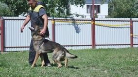 狗和教练员在围场 免版税图库摄影