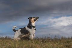 狗和暴风云-起重器罗素狗 库存照片