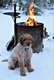 狗和桶火 图库摄影