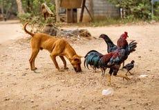 狗和母亲母鸡鸡 免版税库存图片