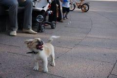 狗和泡影 免版税图库摄影