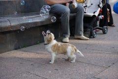 狗和泡影 免版税库存图片