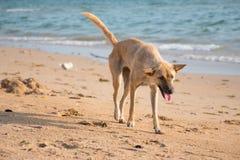 狗和海 免版税库存图片