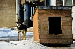狗和狗窝1 免版税库存照片