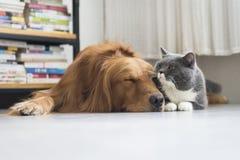 狗和猫一起偎依 免版税库存照片