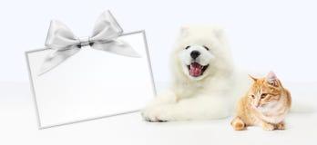 狗和猫与在白色背景隔绝的空白的礼品券 免版税库存照片