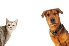 狗和猫与拷贝空间 免版税库存图片
