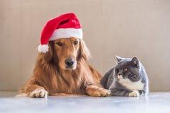 戴狗和猫圣诞节帽子  免版税库存照片