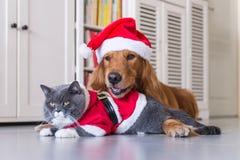 戴狗和猫圣诞节帽子  免版税库存图片