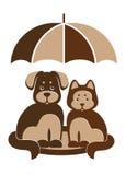狗和猫在伞下 库存图片