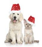 狗和猫在圣诞老人红色帽子 免版税库存照片