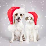 狗和猫在圣诞节帽子 免版税库存照片