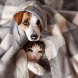 狗和猫在格子花呢披肩下 图库摄影