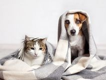 狗和猫在格子花呢披肩下 库存照片