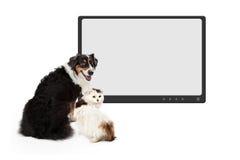 狗和猫在空白的显示器前面 图库摄影